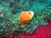 malediven-2013-022