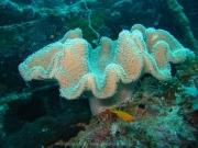 malediven-2013-025