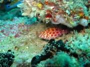 malediven-2013-034