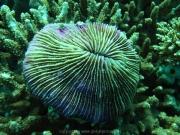 malediven-2013-035