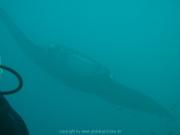 malediven-2013-042