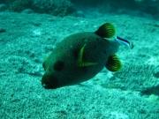 malediven-2013-055