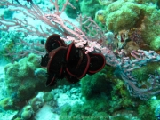 malediven-2013-056