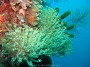 malediven-2013-060