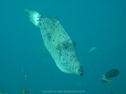 malediven-2013-062