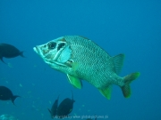 malediven-2013-064