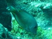 malediven-2013-071