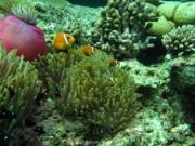 malediven-2013-079