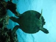 malediven-2013-081