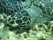 malediven-2013-084