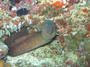 malediven-2013-086