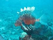 malediven-2013-088