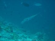 malediven-2013-090