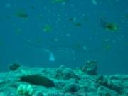malediven-2013-093
