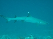 malediven-2013-095