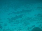 malediven-2013-096