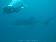 malediven-2013-102