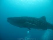 malediven-2013-112