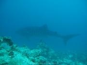 malediven-2013-115
