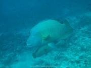malediven-2013-129