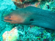 malediven-2013-134