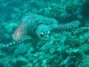 malediven-2013-135