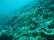 malediven-2013-136