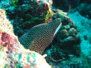 malediven-2013-137