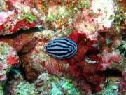 malediven-2013-140