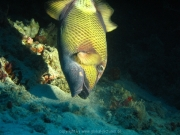 malediven-2013-169