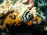 malediven-2013-176