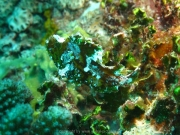 malediven-2013-178