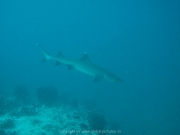 malediven-2013-197