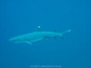 malediven-2013-203