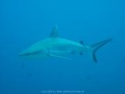 malediven-2013-204