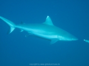 malediven-2013-206