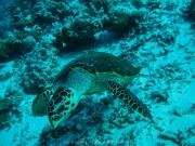 malediven-2013-214