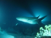 malediven-2013-218