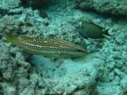 malediven-2013-220
