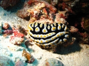 malediven-2013-221