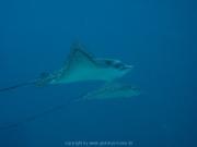 malediven-2013-234