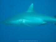 malediven-2013-241