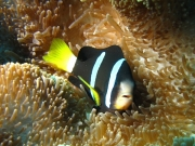malediven-2013-264