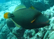 malediven-2013-269