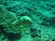 Tauchen Ko Phi Phi - 072