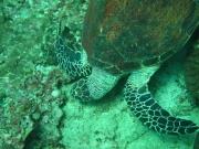 Tauchen Ko Phi Phi - 074