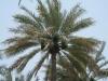 Abu Dhabi - Al Ain City - 15