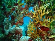 Hurghada 2015 - 040