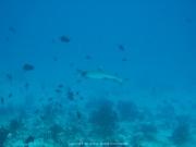 Malediven Tauchsafari 09-2017 - 020