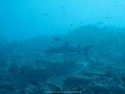 Malediven Tauchsafari 09-2017 - 021